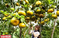 [Photo] Tour trải nghiệm miệt vườn Đồng bằng sông Cửu Long