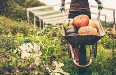 Thực phẩm hữu cơ giúp giảm 25% nguy cơ mắc các bệnh ung thư
