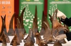 [Video] Trung Quốc cấm dùng sừng tê giác, xương hổ làm thuốc