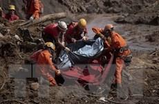 Vụ vỡ đập tại Brazil: Khó có hy vọng còn người sống sót