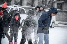 Mỹ: Nhiều trường học tại bang Washington đóng cửa do bão tuyết