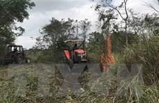 [Video] TP.HCM và Nam Bộ có nguy cơ cháy rừng cao nhất