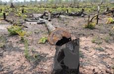 Gia Lai: Gần 3ha rừng vành đai biên giới ở huyện Ia Grai bị phá