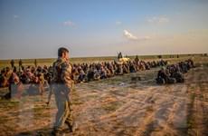 Syria: Hơn 3.000 tay súng IS tại tỉnh Deir al-Zour ra hàng