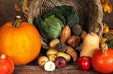 Nhật Bản cho phép thực phẩm biến đổi gene tân tiến bán ra thị trường