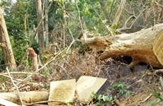 Đắk Lắk lại phát hiện thêm vụ phá rừng ở Ea Kar, tạm giữ 4 đối tượng