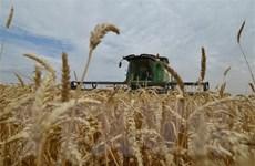 [Video] Mỹ thắng kiện Trung Quốc về áp hạn ngạch thuế với gạo, lúa mỳ