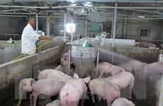 Doanh nghiệp Việt giúp Lào lập hệ thống tin chống dịch bệnh chăn nuôi