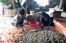 Khai trương Tuần lễ mận và nông sản an toàn của Sơn La tại Thủ đô