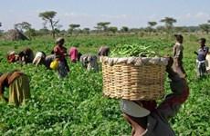 Tổng thống Nigeria yêu cầu điều tra vụ 18 nông dân bị giết dã man