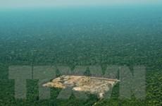 Brazil mất gần 1 triệu ha rừng Amazon trong vòng 30 năm