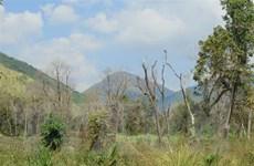 Mưa lớn trên diện rộng làm giảm nguy cơ cháy rừng tại Vĩnh Phúc