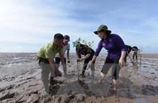 Tỉnh Bạc Liêu phát động ra quân trồng rừng phòng hộ ven biển