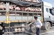 TP. HCM tăng kiểm tra giám sát nguồn thịt lợn vận chuyển vào địa bàn