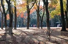 Tour du lịch miền Tây Nhật Bản cho phóng viên dự hội nghị G20
