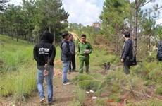 Công an Lâm Đồng xác minh hiện trường vụ chặt hạ rừng thông
