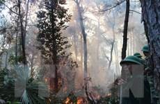 Quảng Ngãi cơ bản khống chế vụ cháy rừng tại huyện Đức Phổ