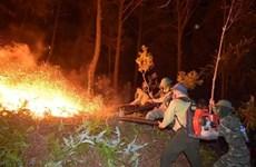 Cháy lớn khiến các tỉnh miền Trung mất hơn 100ha rừng trong 5 ngày