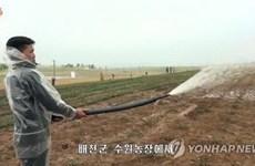 Hạn hán kéo dài có thể gây thiệt hại nặng cho vụ mùa ở Triều Tiên