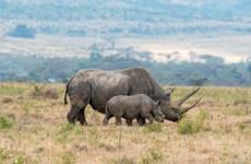 Sắp phát hành trái phiếu bảo vệ động vật đầu tiên trên thế giới