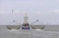 Liên minh châu Âu cấm đánh bắt cá tuyết tại vùng biển Baltic
