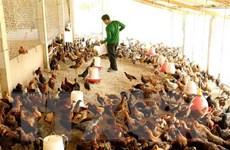 Thừa Thiên-Huế phát triển mô hình kinh tế trang trại trên cát