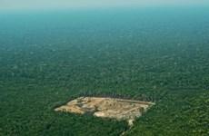 Diện tích rừng già Amazon bị chặt phá tại Brazil tăng 278%