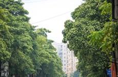 Hà Nội: Trồng hoa sữa ở bãi rác Nam Sơn không có hiệu quả ngăn mùi