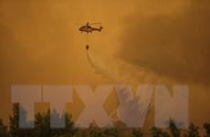 Liên minh châu Âu điều máy bay cứu hỏa hỗ trợ Hy Lạp dập cháy rừng