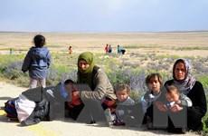 Thổ Nhĩ Kỳ gia hạn thời gian cho người Syria tị nạn trái phép rời khỏi