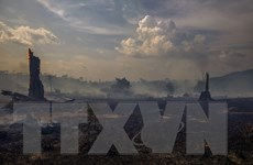 WHO cảnh báo tác động của cháy rừng Amazon với sức khỏe trẻ em