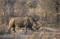 LHQ đưa công nghệ mới vào quản lý buôn bán động vật hoang dã