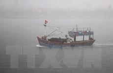 Quảng Trị yêu cầu các chủ tàu thuyền không ra khơi từ chiều 2/9