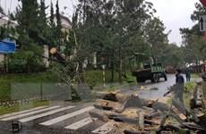 Lâm Đồng: Mưa lớn khiến nhiều nhà dân bị tốc mái, cây xanh bật gốc