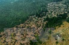 Tình trạng phá rừng Amazon tiếp tục tăng tháng thứ tư liên tiếp