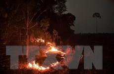 Phát hiện hơn 2.500 điểm nóng cháy rừng tại Đông Nam Á