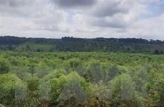 Đắk Nông: Giao 1.600ha rừng cho công ty không có chức năng quản lý