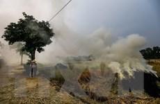 Sử dụng rơm rạ theo hướng kinh tế giúp giảm thiểu ô nhiễm không khí