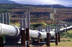 Xuất khẩu dầu thô của Mỹ tiếp tục tăng trong nửa đầu năm