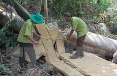 Phú Yên kiểm tra thực tế và phát hiện vụ phá rừng Hòn Đác