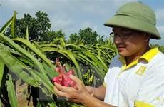 Nông sản Việt với cơ hội tiếp cận các thị trường xuất khẩu lớn