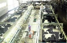[Video] Việt Nam lần đầu tiên xuất khẩu sữa sang Trung Quốc