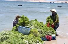 Việt Nam-Hàn Quốc hướng tới nền kinh tế xanh và tuần hoàn