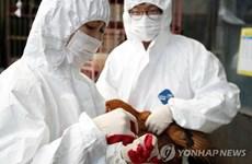 Hàn Quốc: Ca nghi nhiễm virus cúm gia cầm có thể gây tử vong ở người