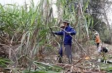 Tạo môi trường cạnh tranh công bằng để phát triển ngành mía đường