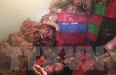 Đột kích, triệt phá đường dây kinh doanh thịt nhiễm tả lợn châu Phi