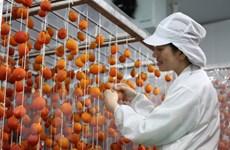 [Photo] Nhà máy hồng sấy treo công nghệ Nhật Bản đi vào hoạt động
