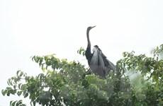 Đồng Nai hạn chế dùng flycam để bảo vệ đàn chim cổ rắn quý hiếm