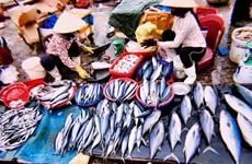 [Video] Chợ cá Đồng Hới - địa điểm du khách nên tới khi ghé Quảng Bình
