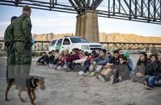 Cơ quan Mỹ thiếu nhân lực để truy quét người nhập cư trái phép